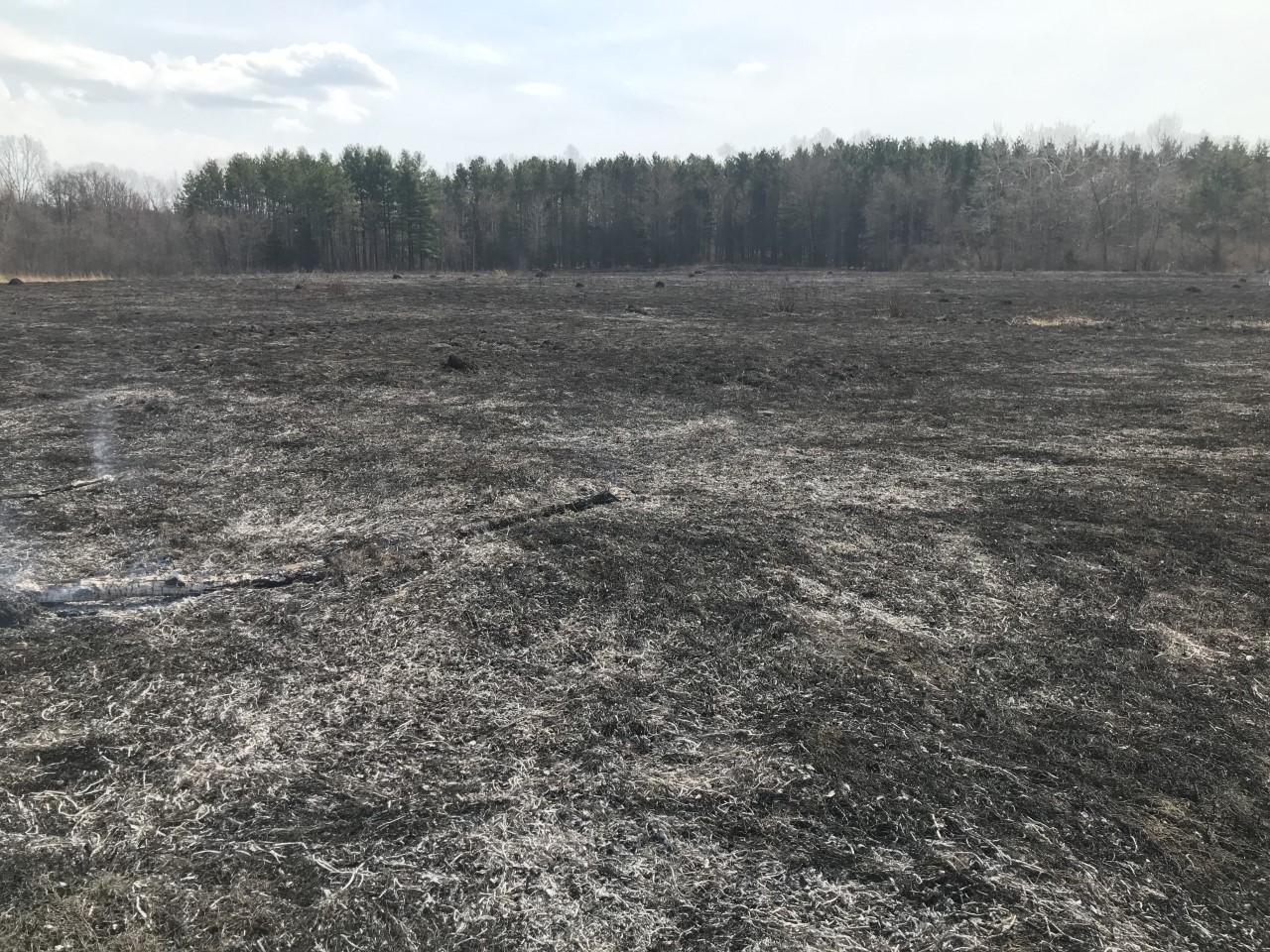 Prescribed burn in Earl's Prairie