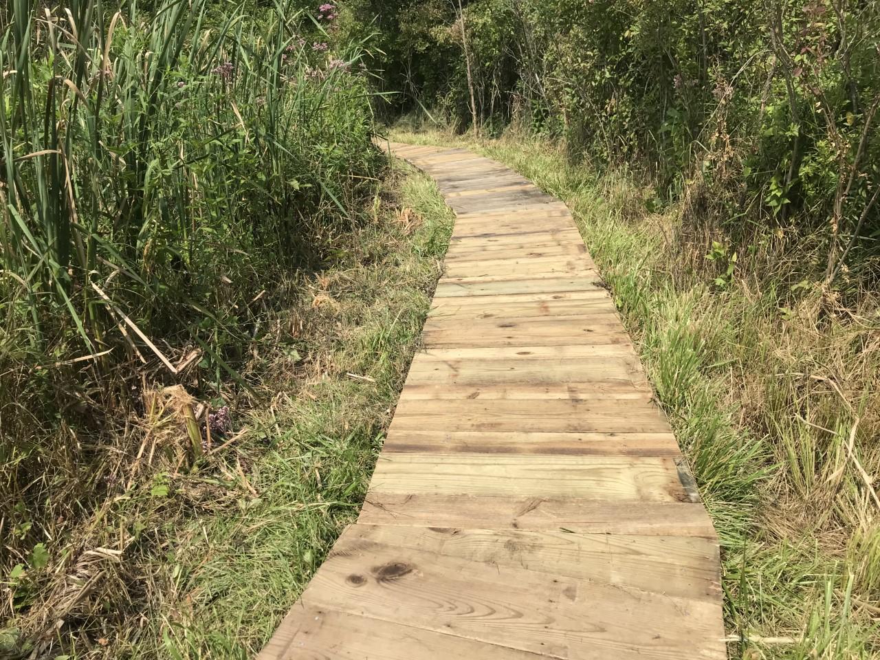 boardwalk 5